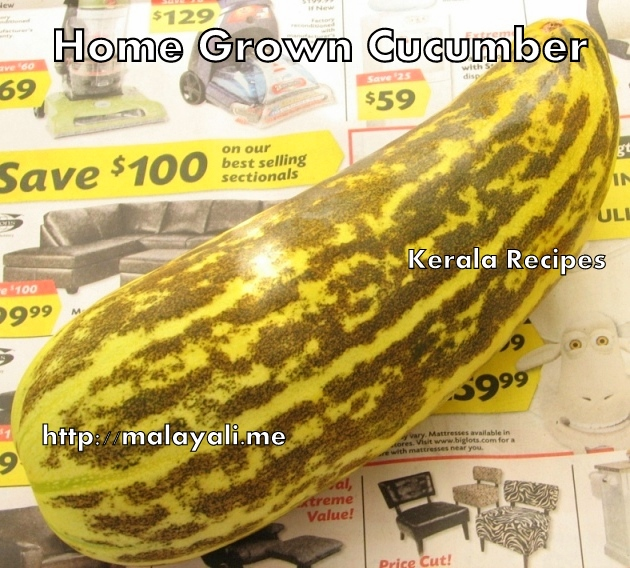 Home grown Cucumber/Squash